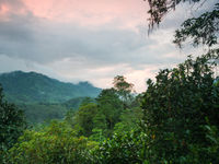 De zon zakt boven het weelderige bos van Sri Lanka. © Billy Herman