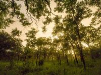 Het leefgebied van de Indian peafowl. © Billy Herman