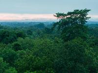 Het regenwoud gonst tijdens de vroege ochtend van de vogelgeluiden. © Billy Herman