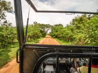 Op safari door de secundaire bossen. © Billy Herman
