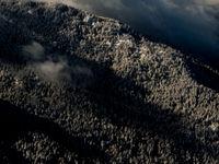 Een beboste bergflank in de sneeuw.  © Sebastian Vervenne