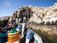De boottrip naar de Farne Islands is bij iedereen favoriet. © Yves Adams