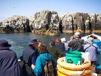 De boottocht naar de Farne Islands is een ervaring voor alle zintuigen! © Yves Adams