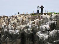 Bezoekers op Inner Farne Island. © Yves Adams
