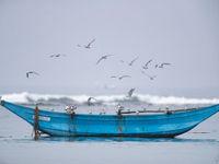 Witwangsternen cirkelen boven een boot. © Rudi Debruyne