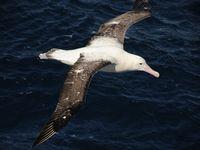 Gigantische vogels zijn het. © Oceanwide Expeditions / STARLING reizen