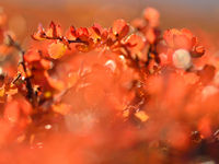 De vegetatie in Harefjord leent zich uitstekend voor prachtige close-ups. © Yves Adams