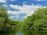 Weelderige mangroves. © Yves Adams