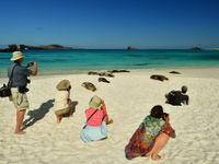 De zeeleeuwen luieren er op los, wat wil je in zo'n omgeving! © Yves Adams