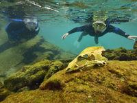 Op schattenjacht in het rif. © Yves Adams