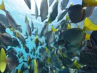 Er zijn tijdens de reis tal van mogelijkheden om het onderwaterleven te verkennen. © Yves Adams
