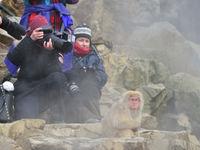 Japanse makaken fotograferen lukt soms wel van erg dichtbij. © Yves Adams