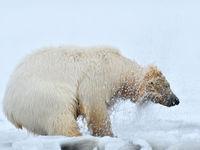 Brrrrr! © Yves Adams