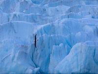 Een wenkbrauwalbatros voor een gletsjer, spectaculair! © Koen Lepla