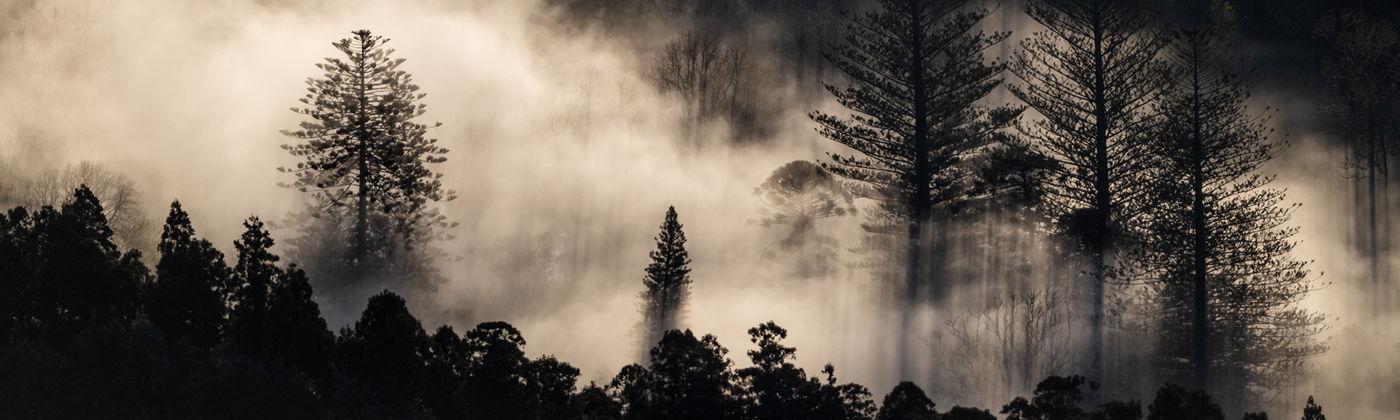 São Miguel en z'n warmwaterbronnen zorgen voor fotogenieke effecten waar stoom en de dramatische bomen centraal staan. © Sebastian Vervenne / u-visualize