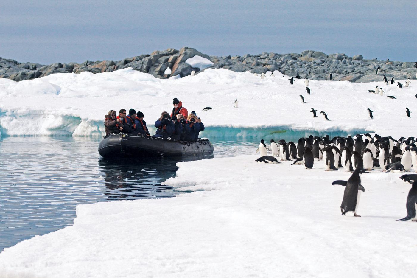 Adélie pinguïns laten zich mooi bekijken vanaf de zodiac. © K. Ovsyanikova / Heritage Expeditions