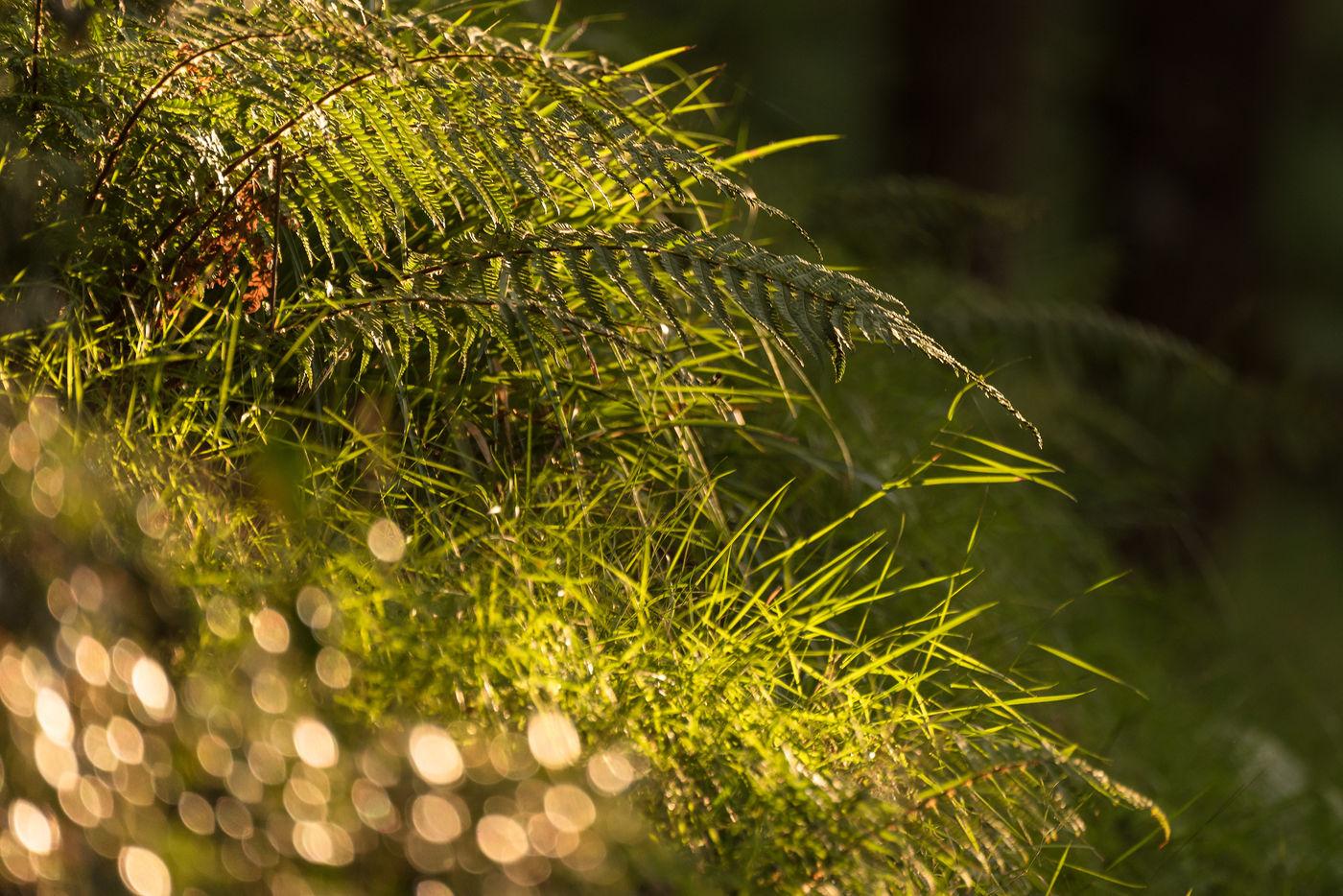 Sfeerbeeld in het bos van Tarr Steps. © Sandy Spaenhoven