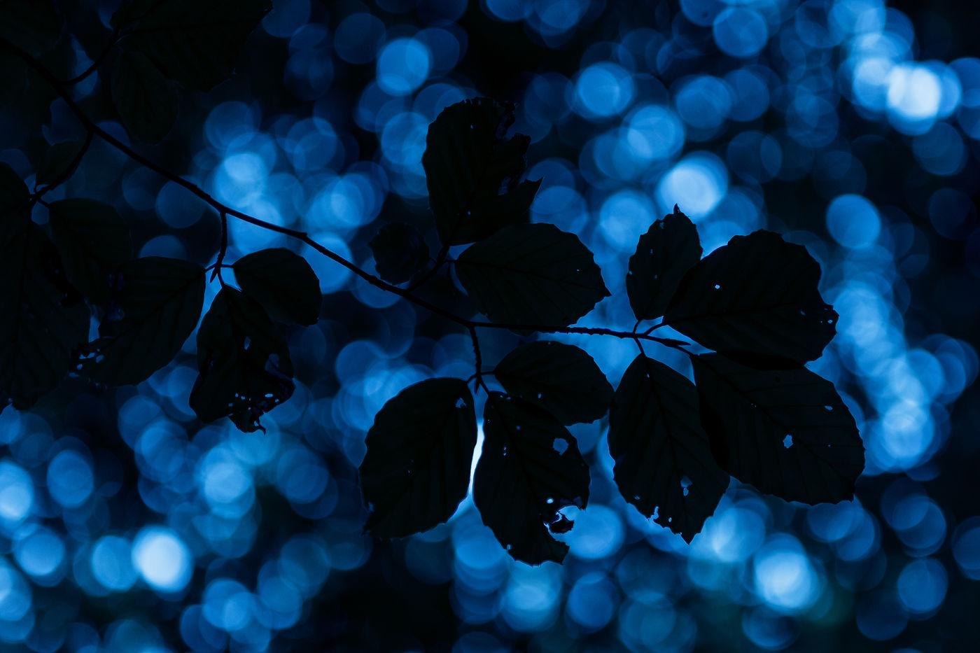 Verdwaald in het beukenbos. © Sandy Spaenhoven