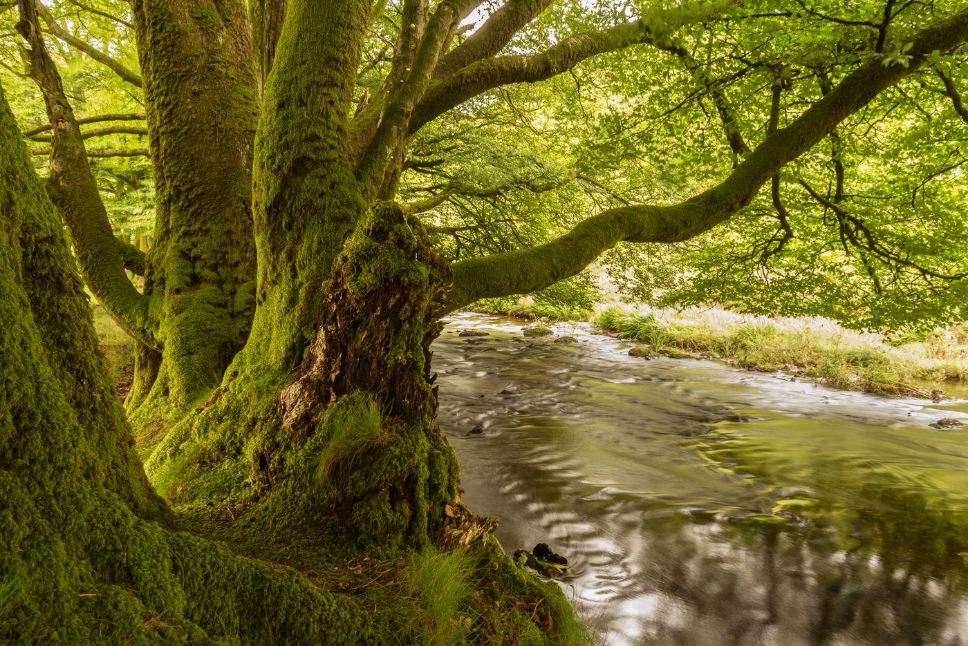 De Barle stroomt vredig voorbij enkele oude reuzen. © Sandy Spaenhoven