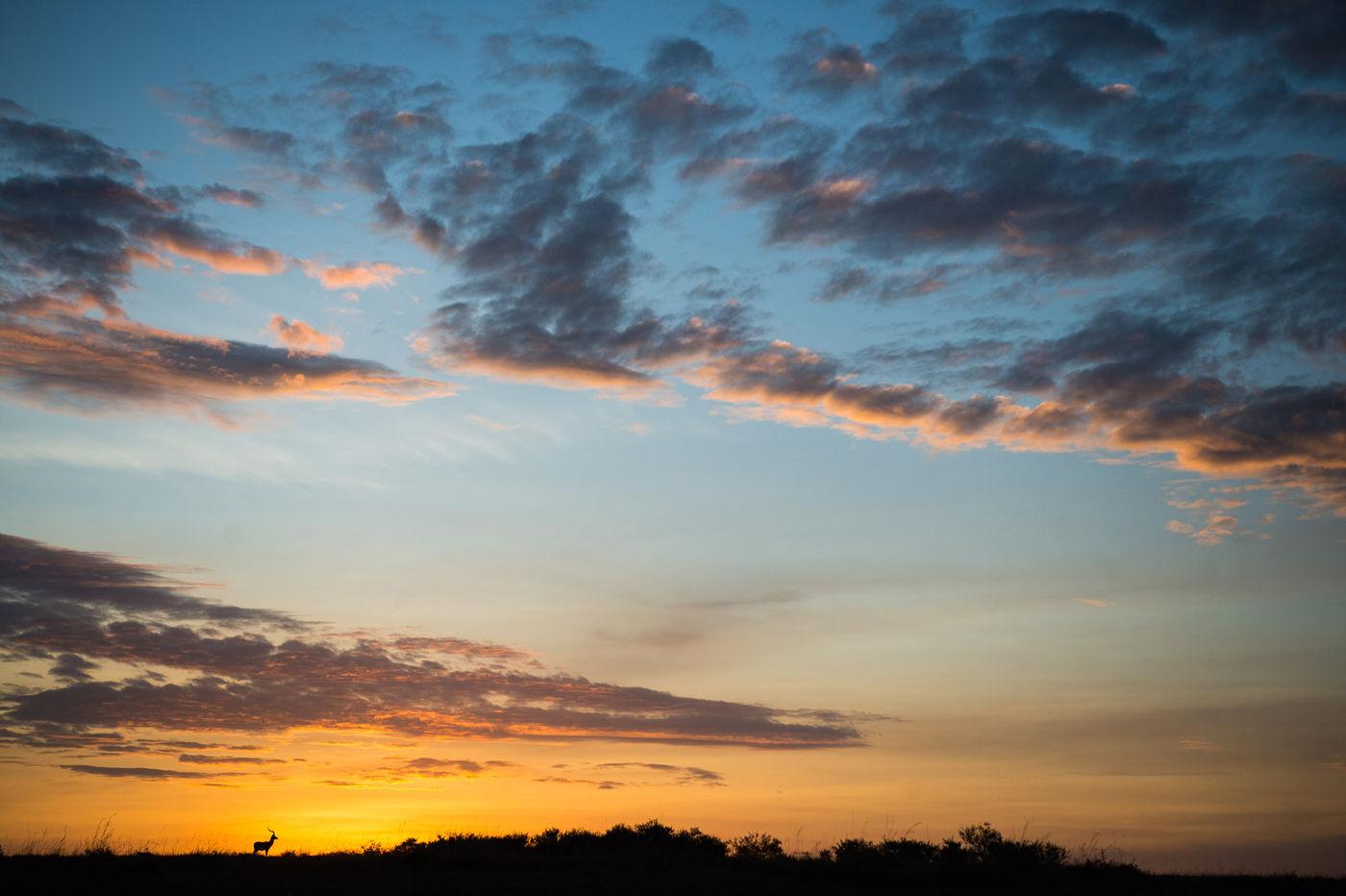 Een impala bij zonsopkomst. © Billy Herman