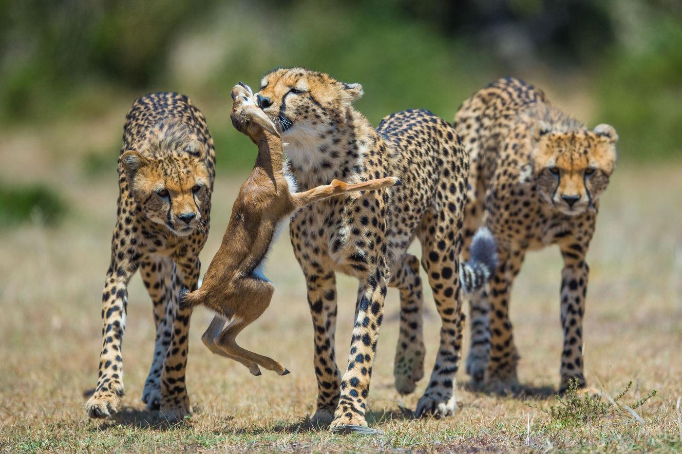Een kill in levende lijve zien is een niet te beschrijven belevenis. © Billy Herman