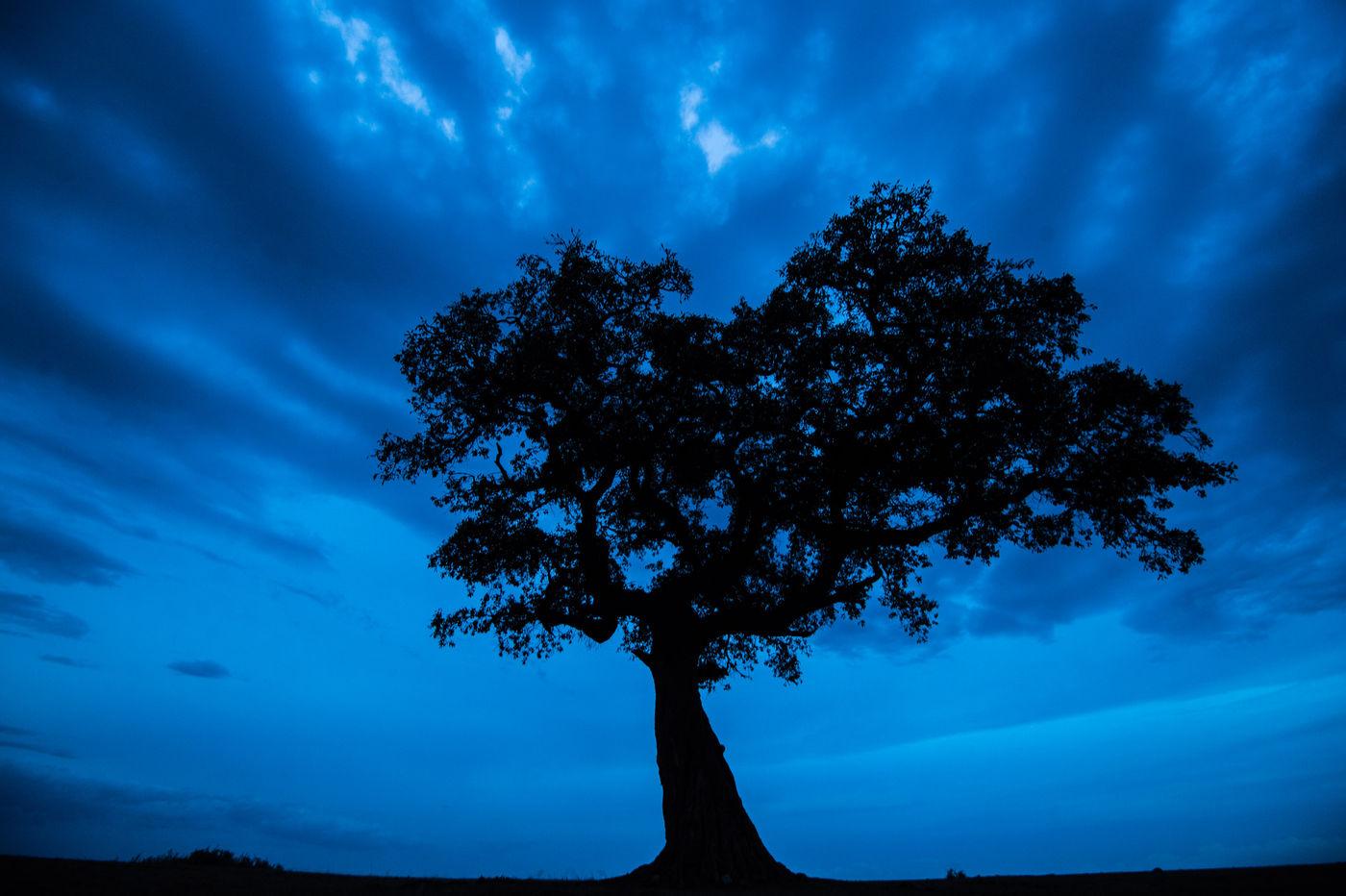 Blue hour lang na zonsondergang zet een majestueuze boom in de verf. © Billy Herman