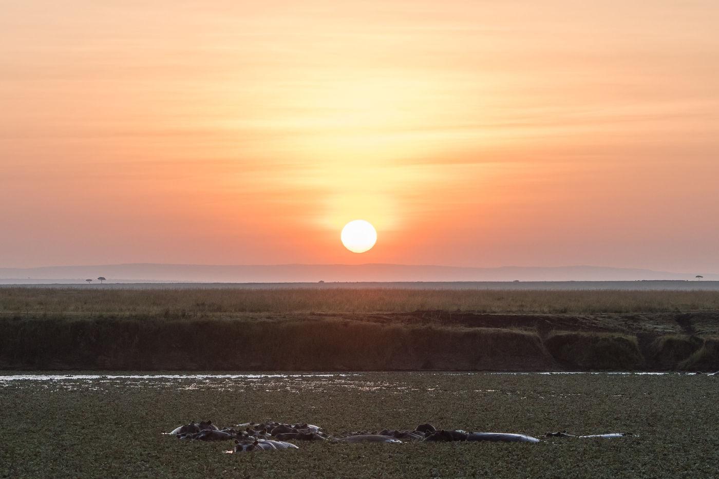 Nijlpaarden bij zonsopkomst. © Siska Meersman