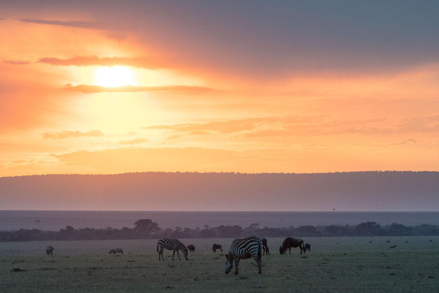 Een feestje op de savanne. © Siska Meersman