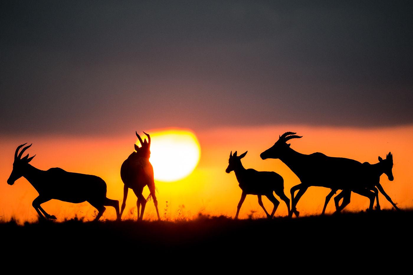 Topi's in het laatste avondlicht. © Billy Herman