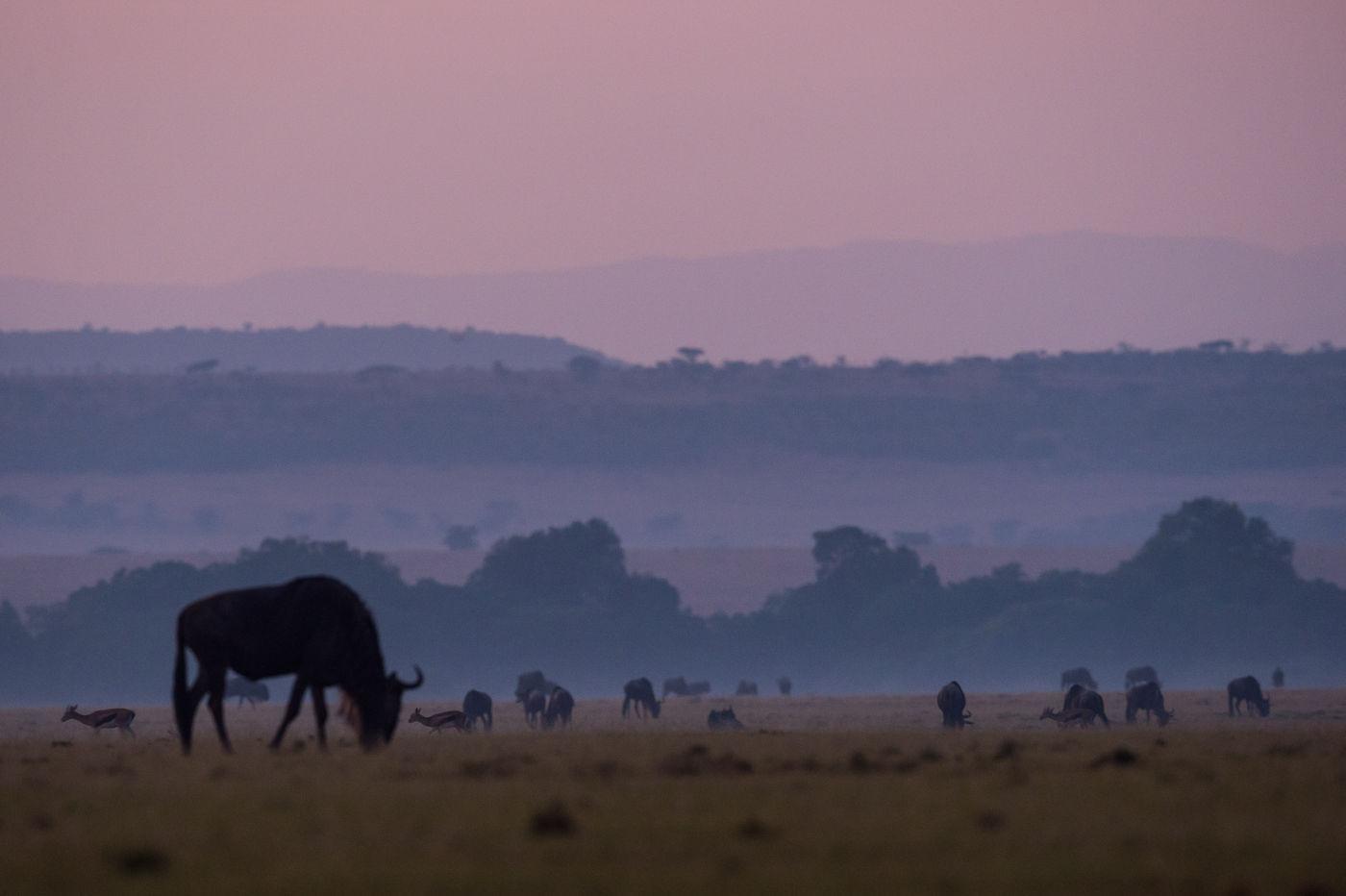 De geluiden vroeg in de ochtend op de savanne zijn onbeschrijfelijk. © Billy Herman