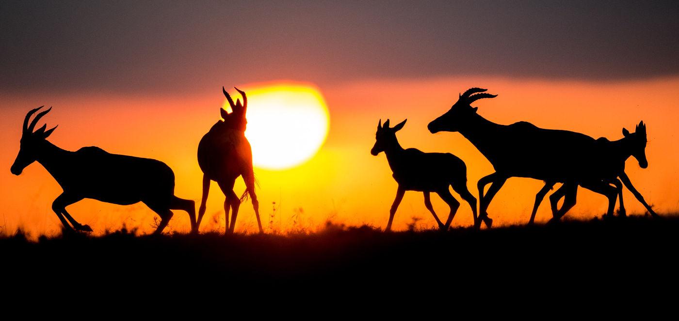 Zonsondergang op de savanne. © Billy Herman