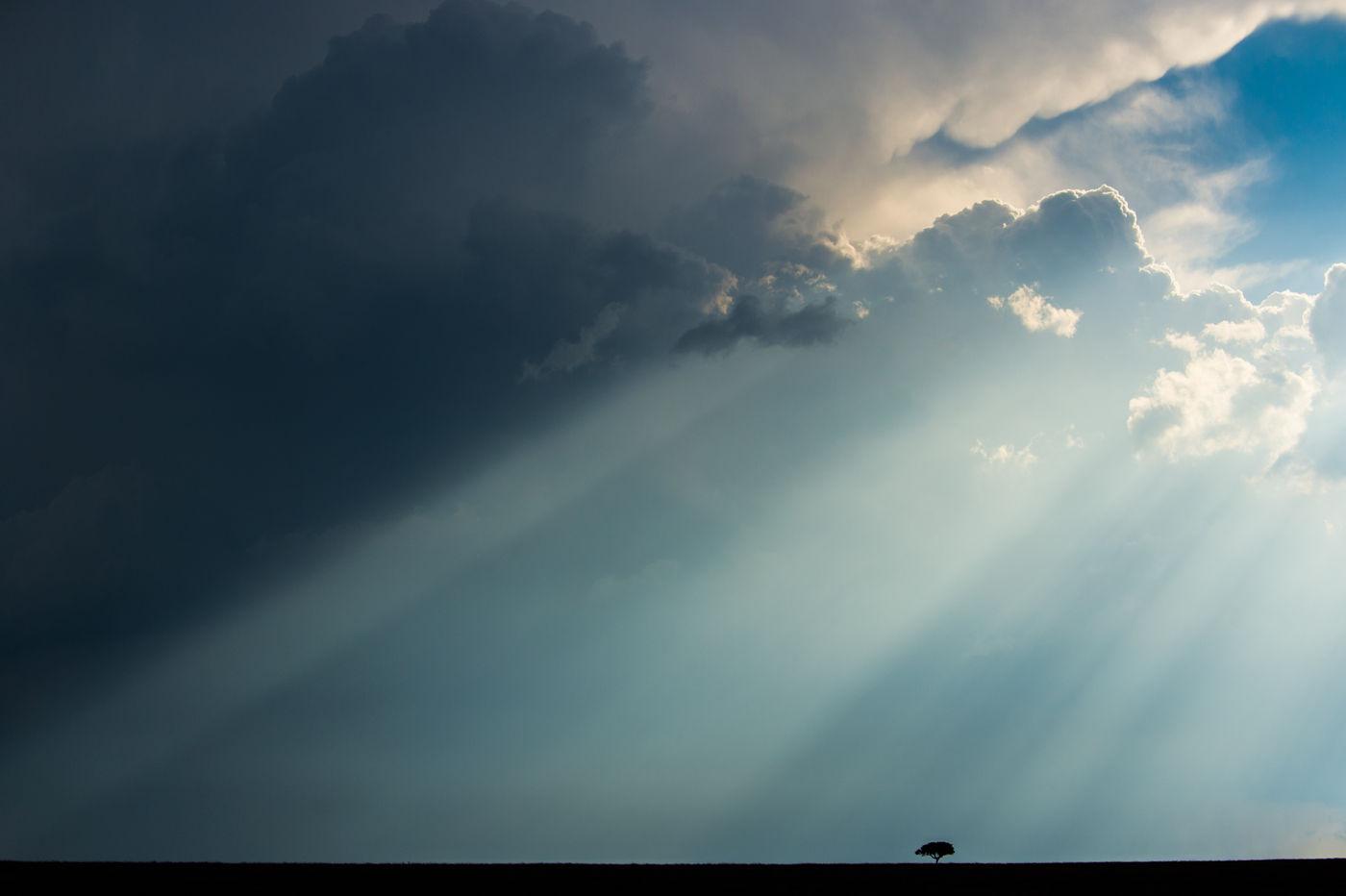 Minimalistisch beeld op de savanne. © Billy Herman