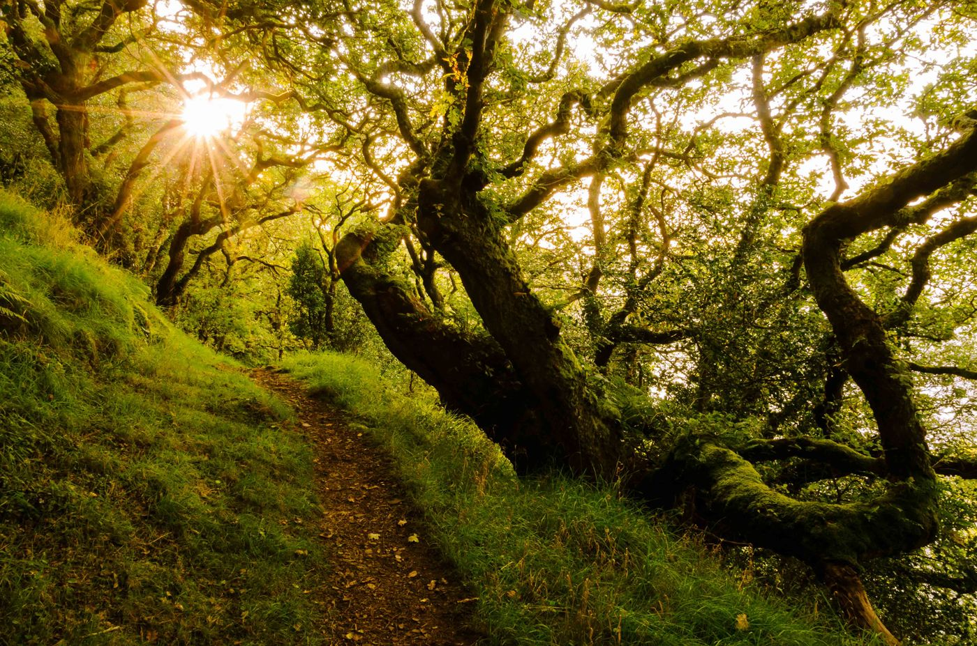 Oude bomen zorgen voor prachtige foto's. © Hans Debruyne