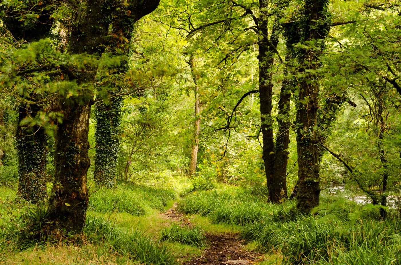 Sfeerbeeld van het bos in Exmoor. © Hans Debruyne