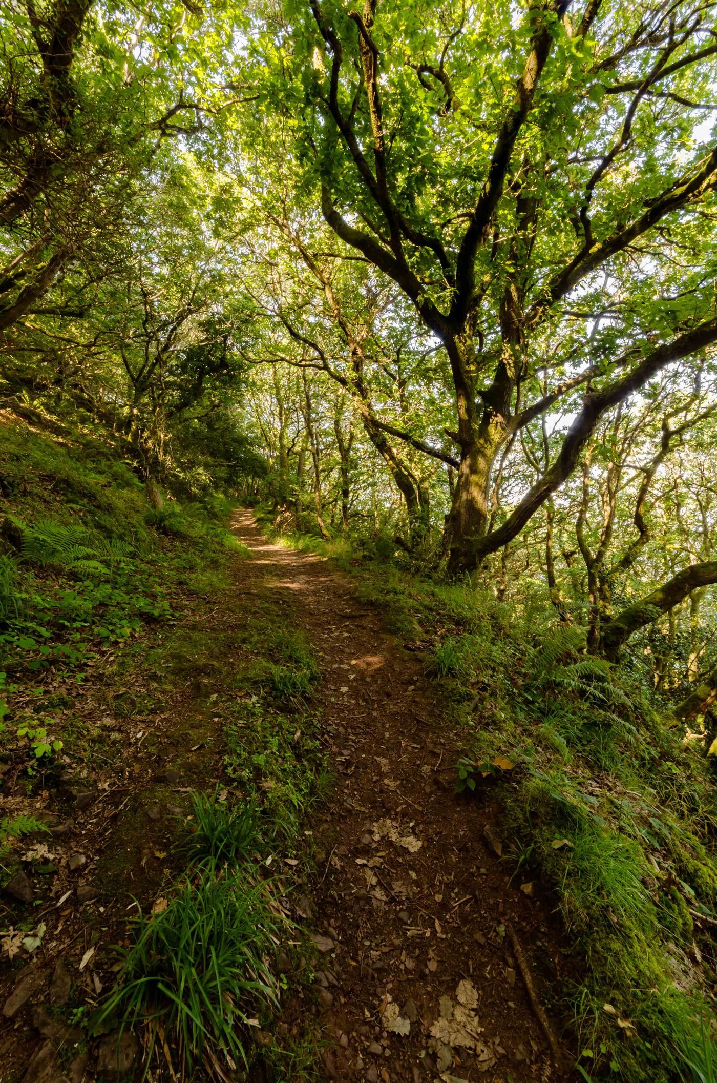 Een oud bospad. © Hans Debruyne