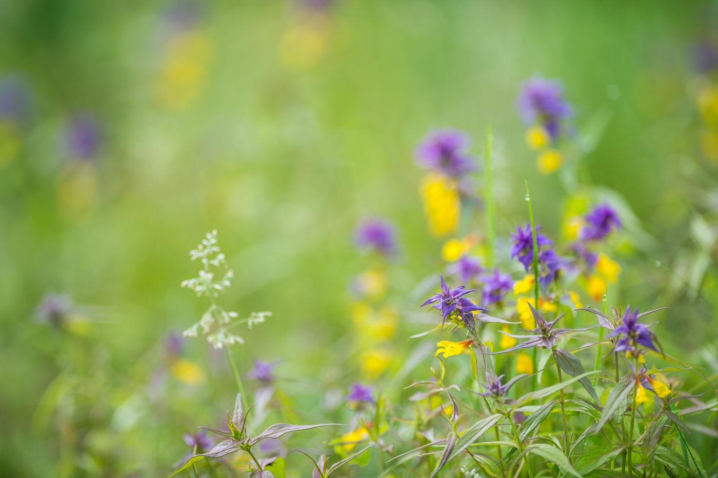 De zomerflora is hier ook niet mis. © Billy Herman