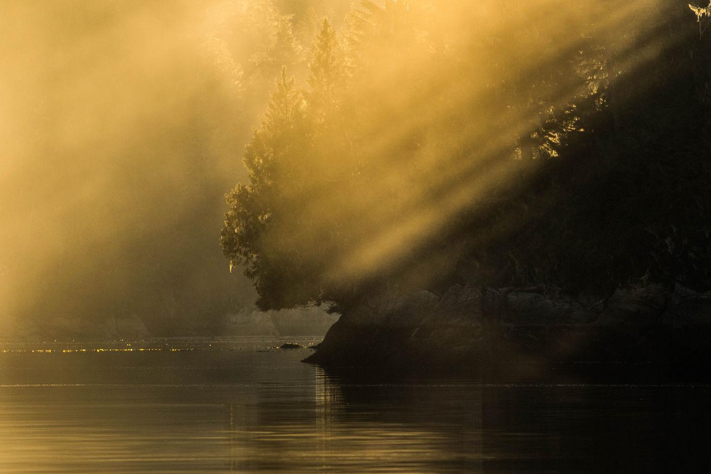 Het meest noordelijke regenwoud ter wereld. © Joachim Bertrands