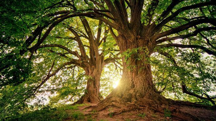 ما هي النباتات التي تنمو بدون تدخل الانسان