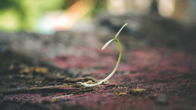 كيف تنتج الازهار نباتات جديدة - كراسة