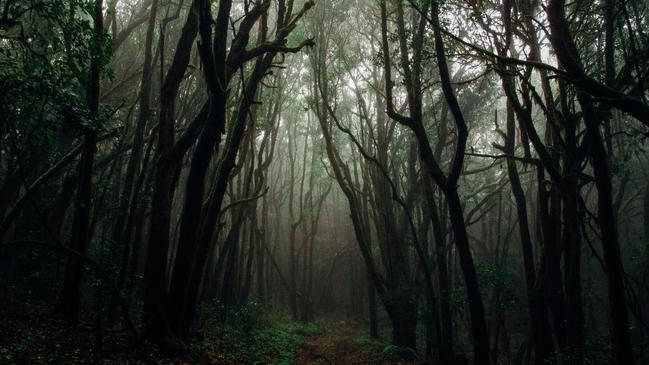 حيوانات تعيش في غابات عجلون ودبين مهددة بالانقراض - كراسة