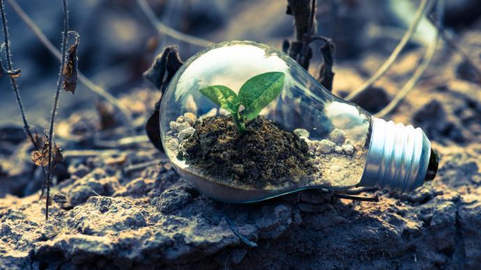 كيف تؤثر المكونات غير الحية في استمرار الانظمة البيئية