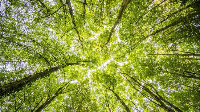 عدد اشجار الغاف في ابوظبي - كراسة