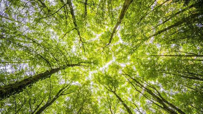 عدد اشجار الغاف في ابوظبي