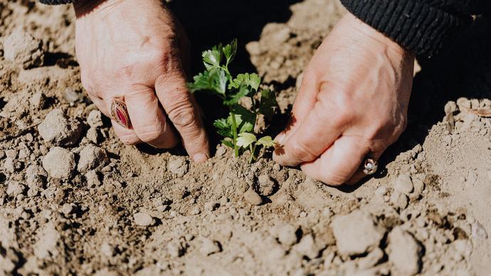 ضرورة عناية الاسر بالزراعة في المساحات الخالية حول بيوتها