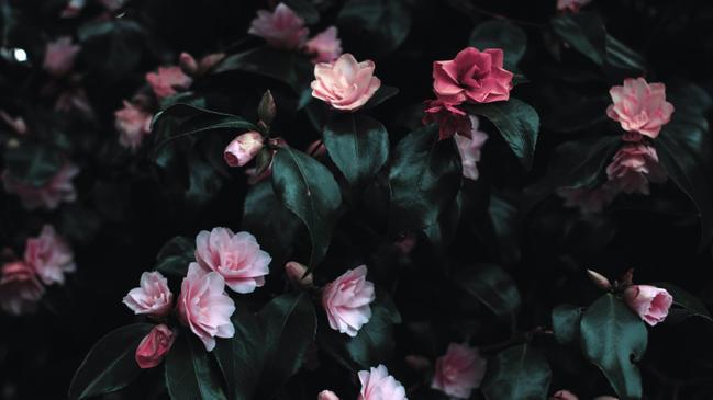 عبارات عن الورد تويتر - كراسة