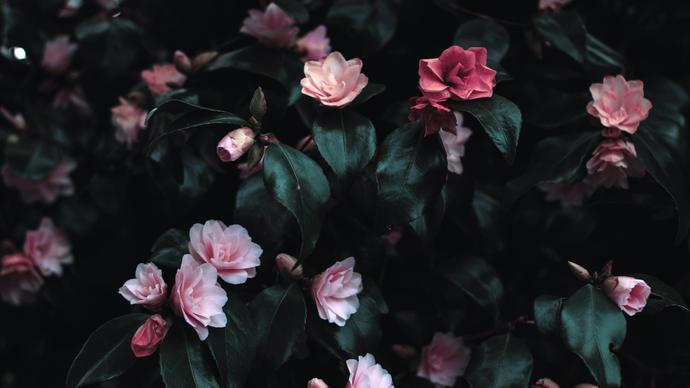 عبارات عن الورد تويتر