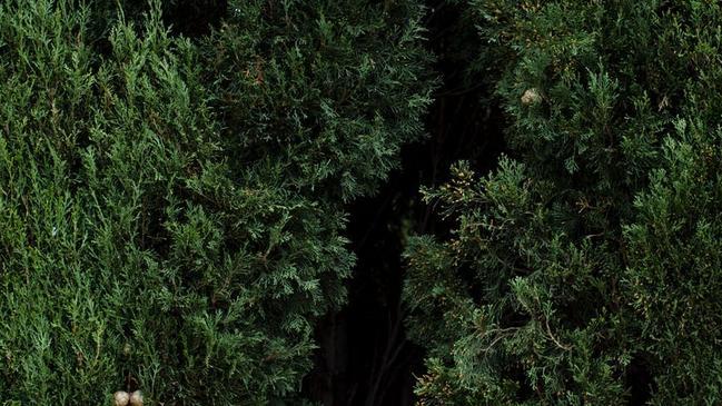 كيف يؤثر المناخ على النبات الطبيعي - كراسة
