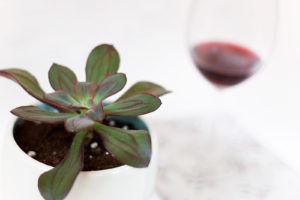 sukulent z czerwonym winem w tle
