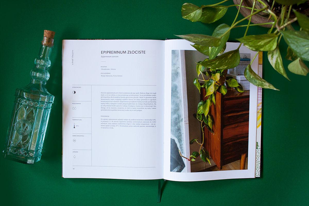 O roślinach recenzja książki fragment o Epipremnum aureum