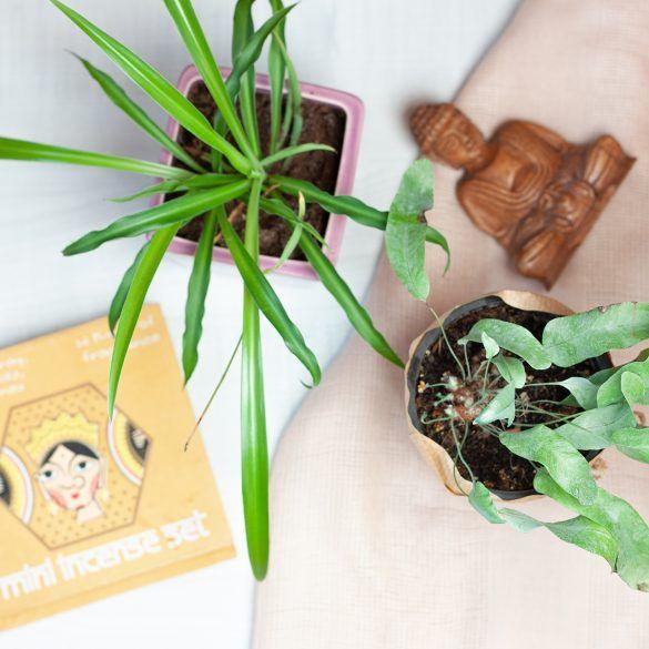 zen space kadzidła rośliny i Budda